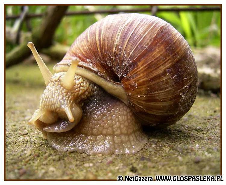 Skup ślimaków