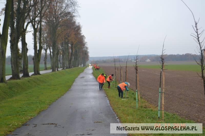 Zielona Droga w gminie Rychliki