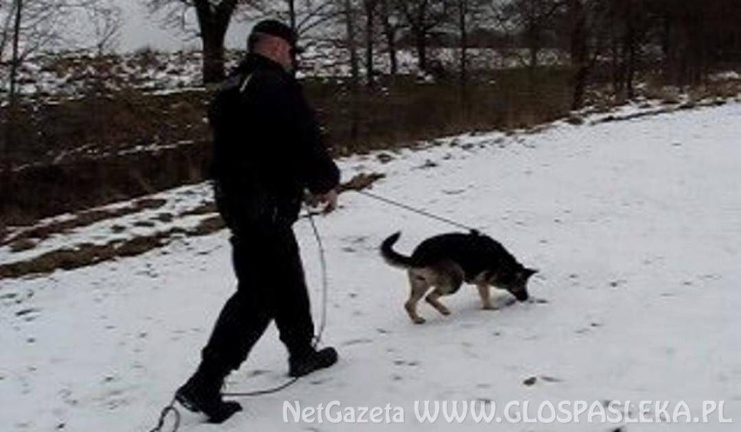 Włamali się do sklepu. W zatrzymaniu pomógł policyjny pies