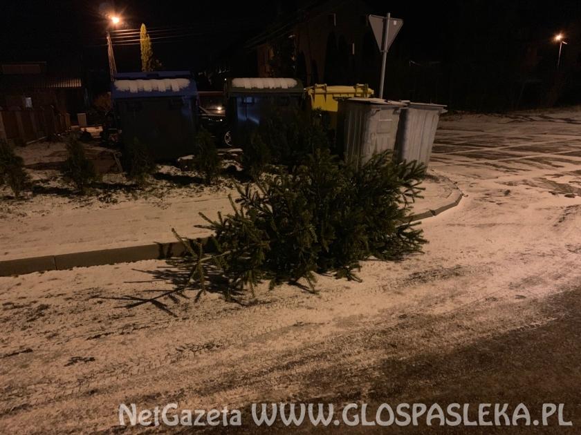 Odbiór drzewek choinkowych