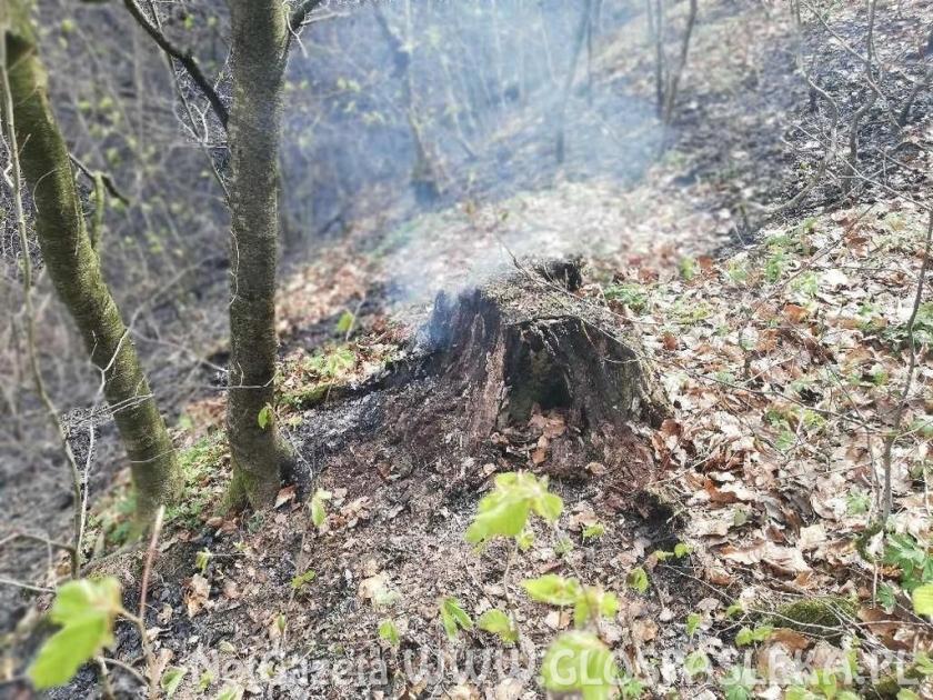 Pożar lasu w Warszewie
