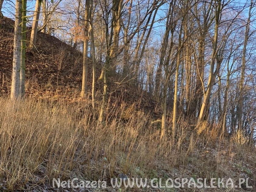 Inwentaryzacja drzew na skarpie zamkowej