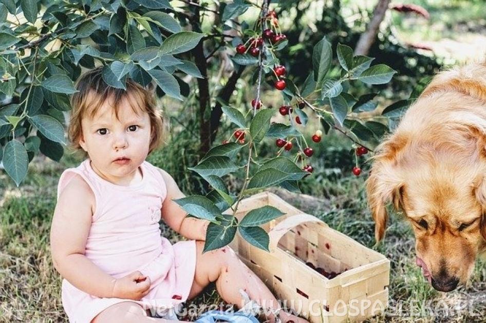 Masz dziecko z fenyloketonurią? Poznaj zasady jego żywienia