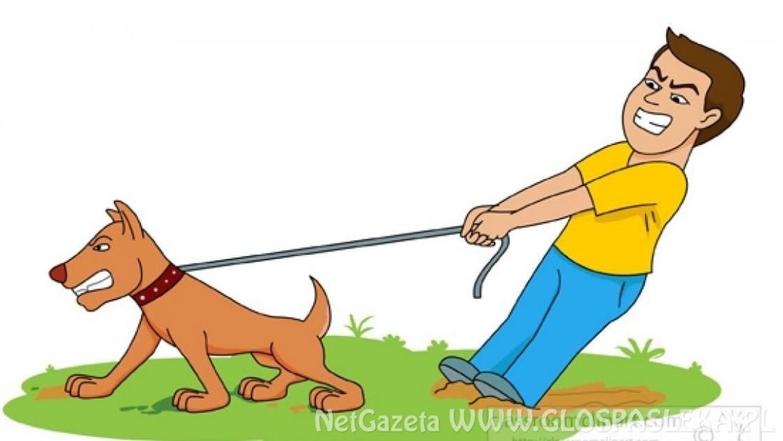 Mandaty dla właścicieli psów